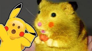 Are Pokemon Animals? - A Pokemon Theory
