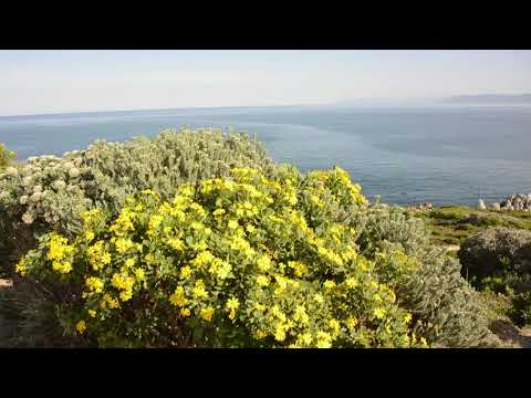 Cape Point & Whale Coast