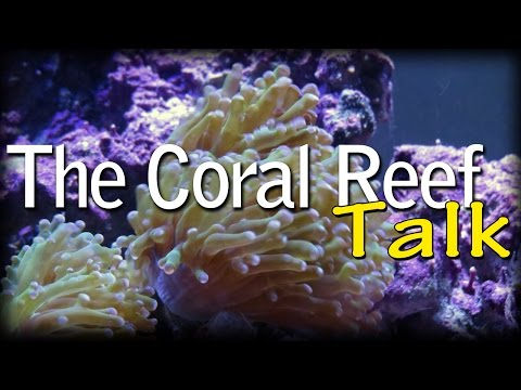 Intro Video for The Coral Reef Talk