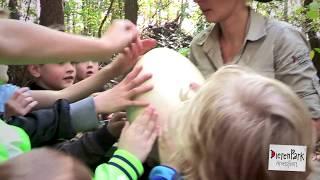 Beleef de DinoAdventures in DierenPark Amersfoort: het ei-mysterie