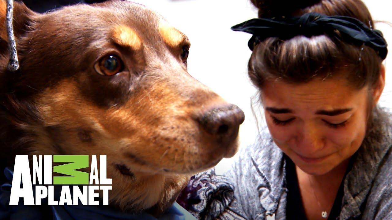 glandula salival inflamada perro