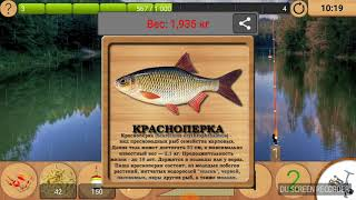 Подборка поклёвок на кукурузу и опарыша (Реальная рыбалка)