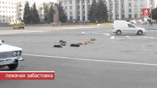"""""""Лежачая забастовка"""" собак в Житомире - Житомир.info"""