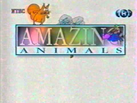 Amazing Animals Intro [ТНТ] (1998)