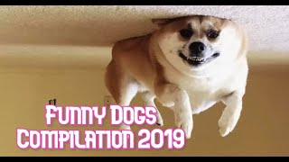 Funny Dogs Compilation 2019! Ultimate dog fails.