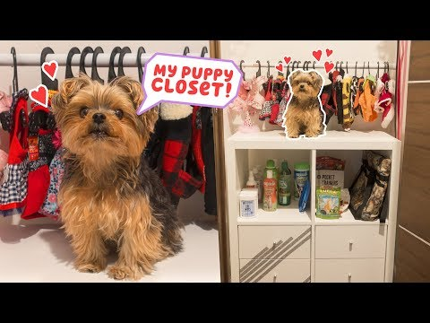 Building My Dog A Closet - DIY
