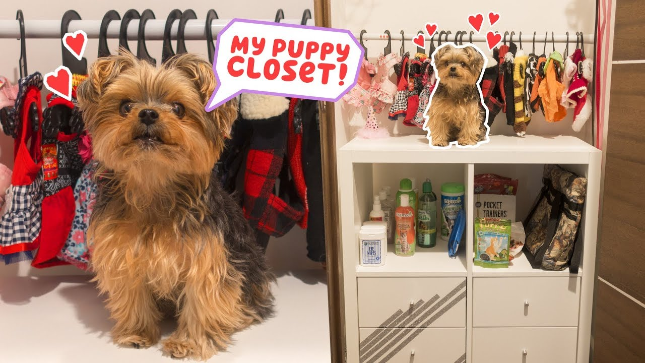 Building My Dog A Closet Diy Youtube