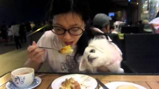 my fifi 吃飯很有儀態 thumbnail