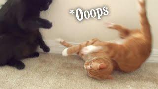 Funny Cat & Kitten Fails Compilation!