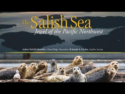 World Oceans Day: A Celebration Of The Salish Sea