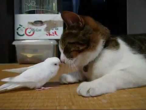 Bird wakes his best friend...a cat!