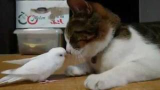 Bird wakes his best friend...a cat!