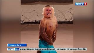 В Ростовском цирке взвесили цирковых животных