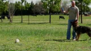 Training Canine
