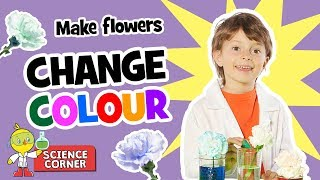 Chirp Science: CHANGE THE COLOUR OF A FLOWER!