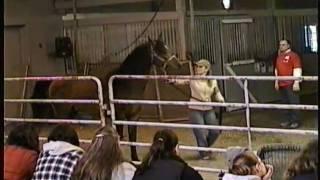 One Eyed Polish Arabian Stallion, Dimitri, Horse Auction, Meadow Wood Farms, Snohomish WA 3/20/2011