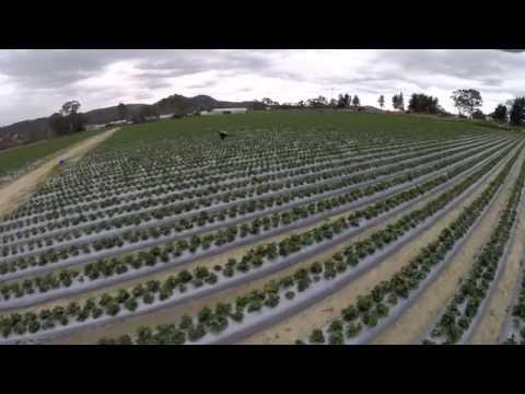 UAV Strawberry Fields