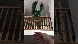 amazing bird flying hand landing mass video  #birds  #wonderpets