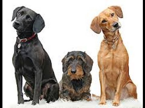 Pet Waste Removal Business