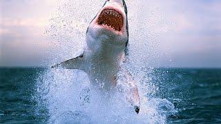 6 фильмов про акул, которые стоит посмотреть
