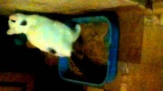Кот какает в лоток.