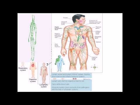 Human Physiology: Organ system overview (Bangla)