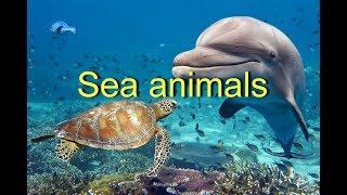 Sea animals. Learn sea animals. Морские животные на английском языке.