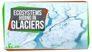 Inside the Tiny Ecosystems Hiding in Glaciers