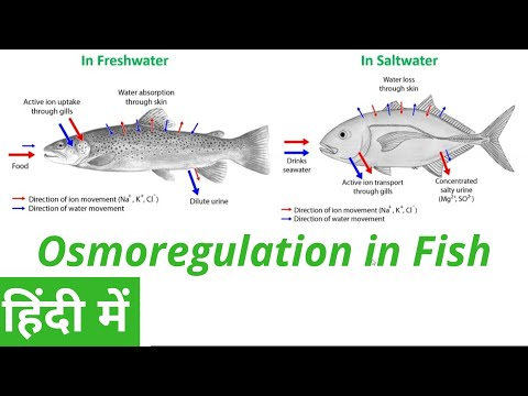 Osmoregulation In Fish In Hindi