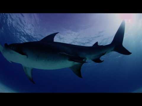 DOKU   Super Sinne der Tiere – Übernatürliche Fähigkeiten