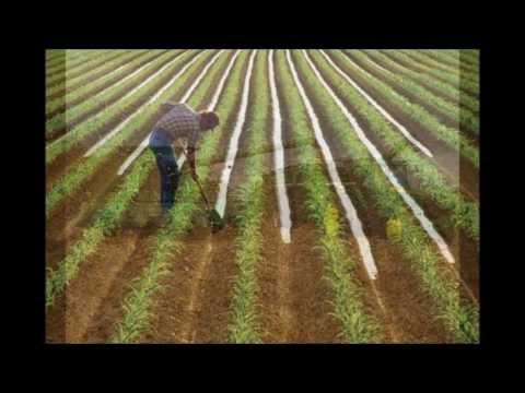 Jethro Tull: Farm On The Freeway