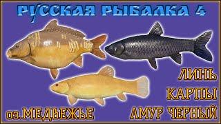 РР4 МЕДВЕЖЬЕ АМУР КАРП ФАРМ РУССКАЯ РЫБАЛКА 4 МЕДВЕЖКА АМУР RUSSIAN FISHING 4 CARP GRASS CARP
