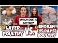 LAYER VS. BROILER POULTRY BUSINESS INVESTMENT | WHICH IS BETTER? | PHILIPPINES