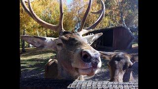 Am hrănit animalele la Moara de Vant -Salicea sau la Zoo Cluj am hrănit animalele