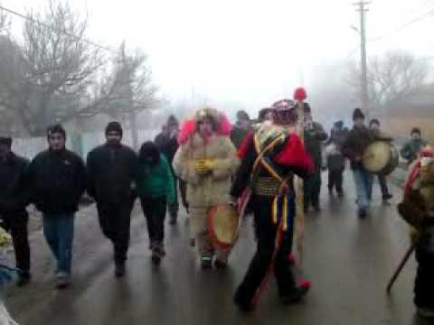 Capra de la Tibanesti pleca de la Costel Bejan spre centru comunii ...