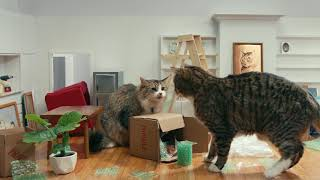 IAMS® Presents: Adult Cats Move In