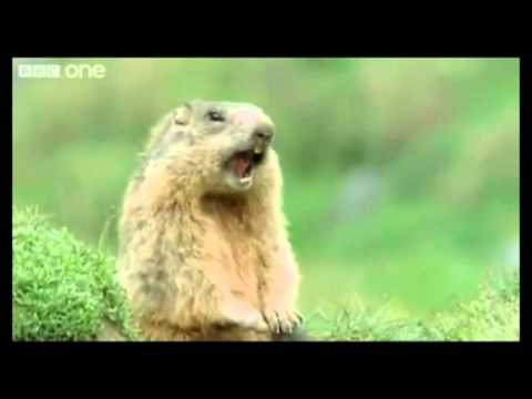 Funny Talking Animals Alan Reloaded