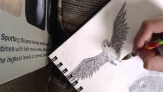 How To Draw a Macaw in Flight - (time lapse)