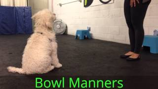Callie, Labradoodle, Puppy Academy Graduation Video, Good Dog Dc, Training