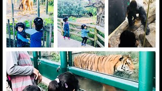 ZOO ANIMALS are WAY FUNNIER! TRY NOT TO LAUGH   Fun Animals for Children and Toddlers   HOUSTON ZOO