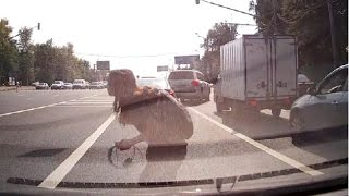 Crazy immortals Russian pedestrians part 1