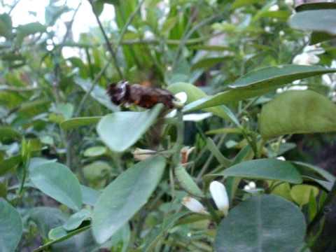 Bo ngua san moi (Mantis Hunter)