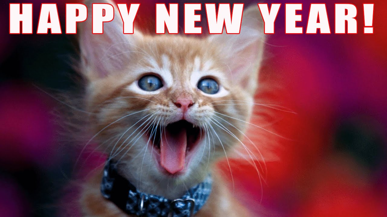 cat happy new year