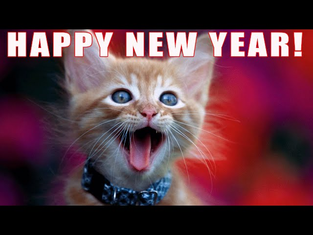 FUNNY CATS SING NEW YEARS