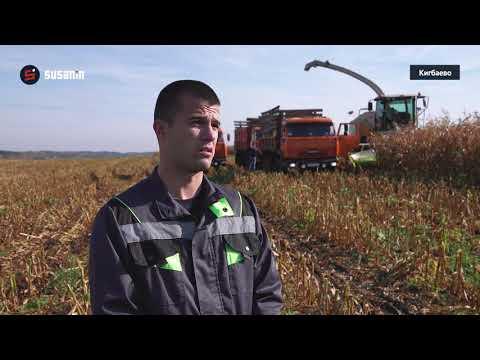 Уборка кукурузы и яровых на полях ООО «Русская нива»