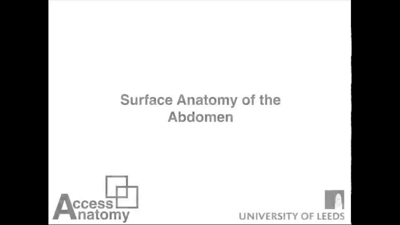 Surface Anatomy of Abdomen - YouTube