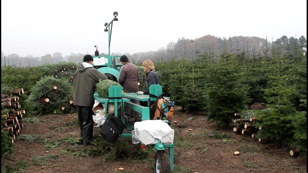 Baling Christmas Trees In Denmark