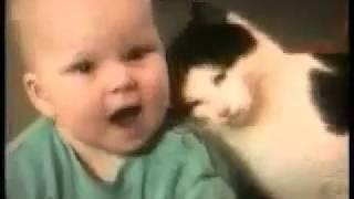 Funny Cats Original Video
