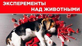 ЭКСПЕРИМЕНТЫ НАД ЖИВОТНЫМИ  проблемы в России и мире