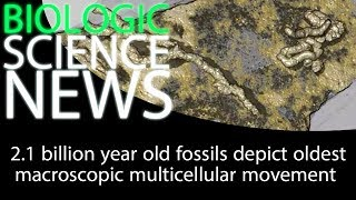 Science News - 2.1 billion year old fossils depict oldest macroscopic multicellular movement 2